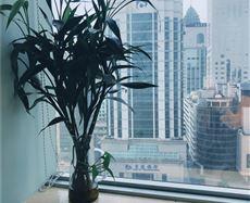 香港中路50号